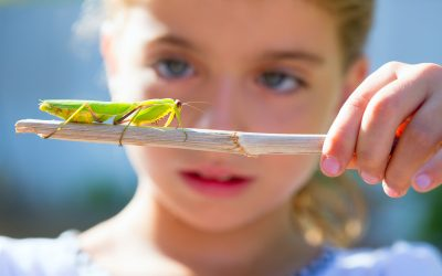 Activities For Kids Who Like Insects